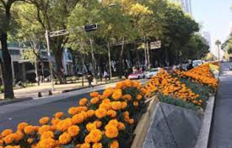Día de muertos se acerca, reforma se pinta de naranja con miles de flores de cempasúchil