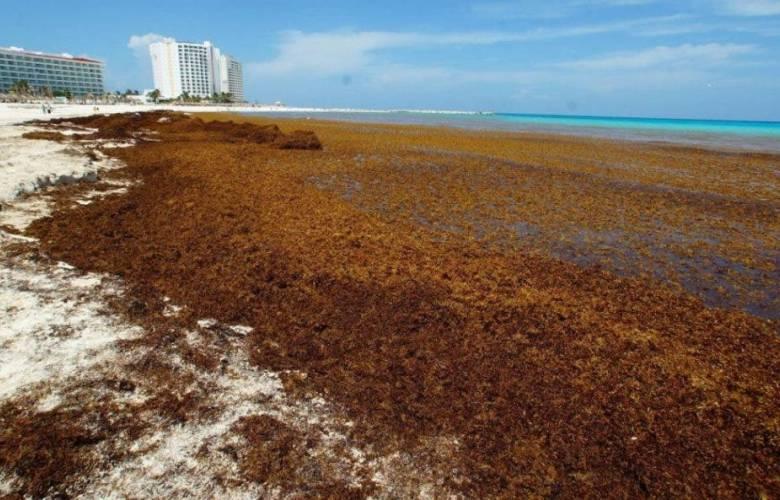 Unas 40 playas de Quintana Roo tienen gran presencia de sargazo